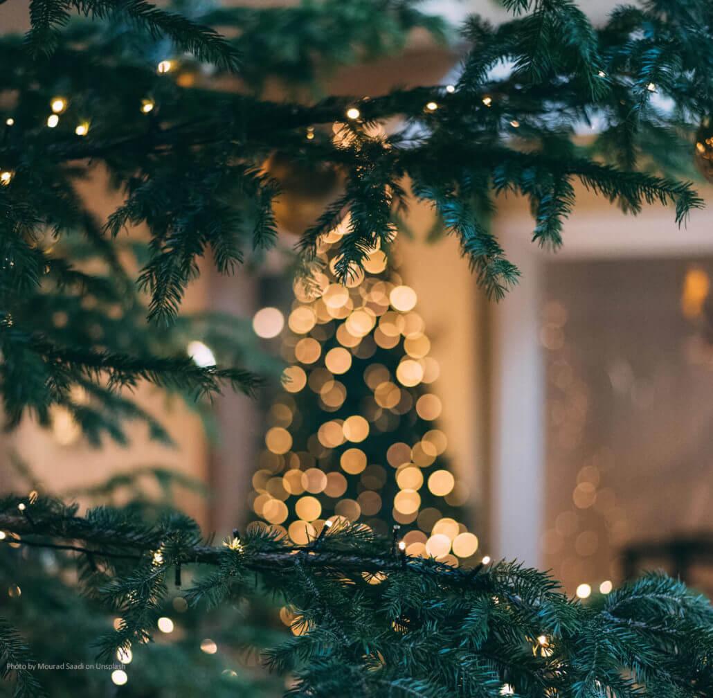 Weihnachtsbäume - Geschichte von Gestern bis Heute