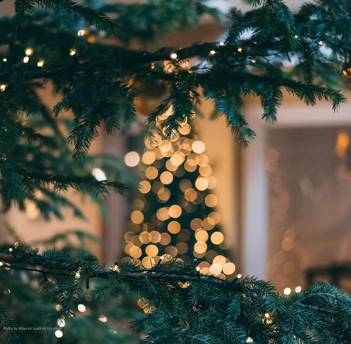 die geschichte des weihnachtsbaums christliche. Black Bedroom Furniture Sets. Home Design Ideas