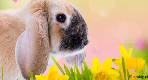 Ostern und seine Bedeutung für heute